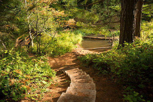 Cultural Connections - Nanaimo's Top 10 Hikes - Linley Valley